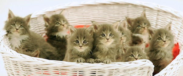 Koťata od Vodafonu