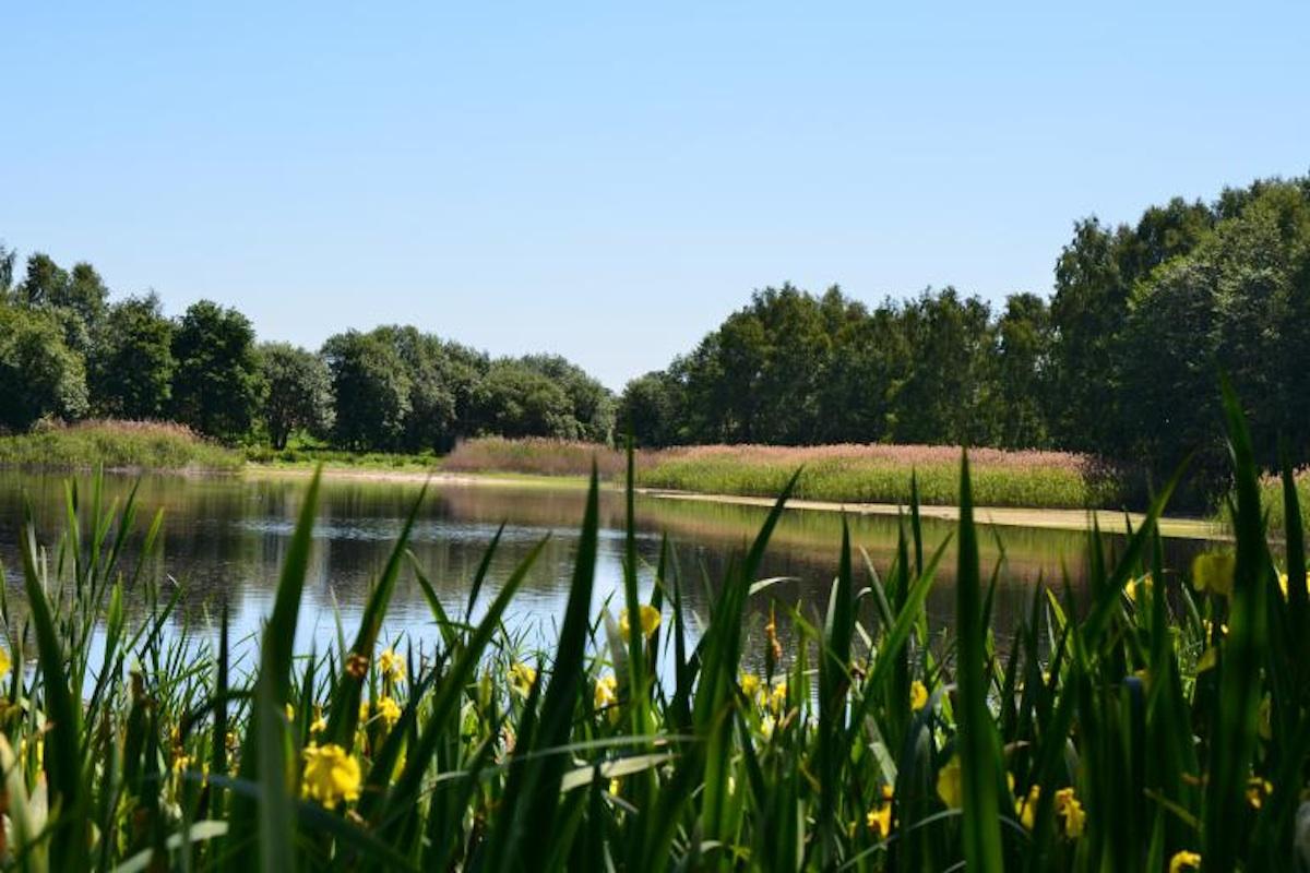 Lidé by měli vědět, kam se česká příroda posouvá a co od nás potřebuje, uvádí Veronika Němcová z organizace Beleco