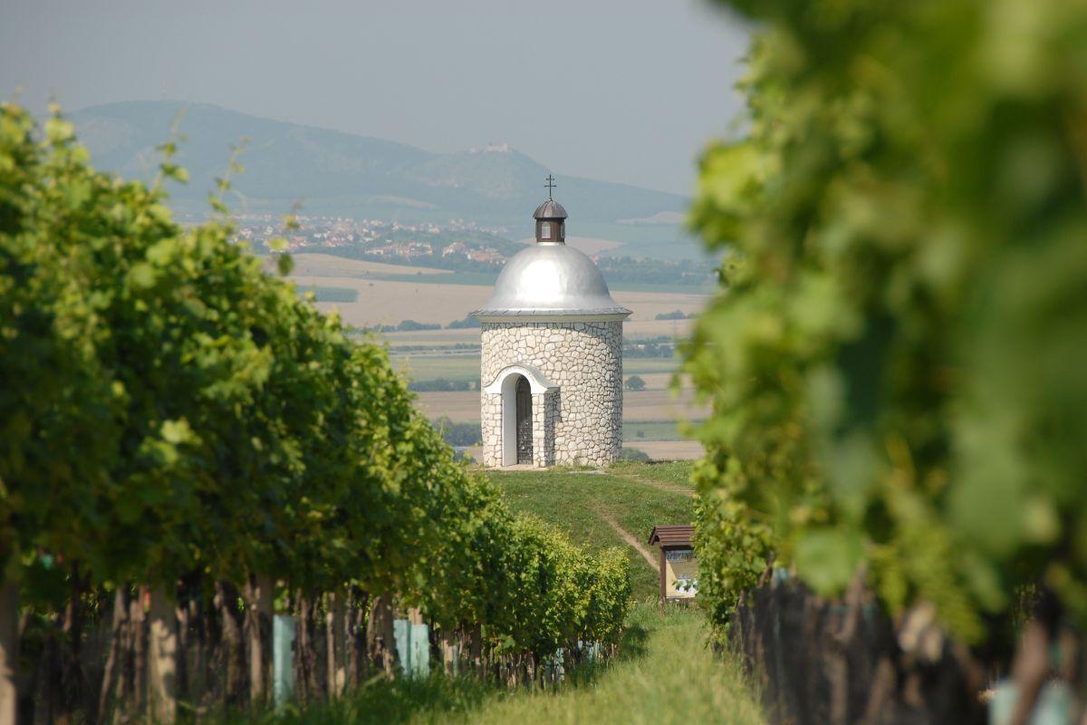 Velké Bílovice představují největší vinařskou obec v Česku