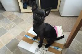 Spokojený pes si najal agenturu Rubikon PR