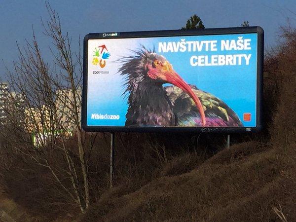 Ředitel Zoo Praha Bobek poslal na Twitter fotku billboardu z místa, kde byl jeden z ibisů odychycen