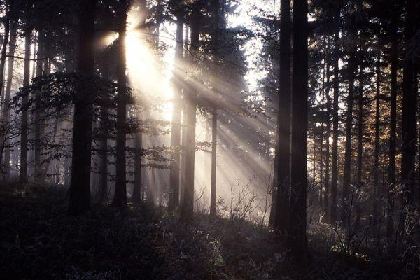 Lesy hodlají skončit s podporou olympioniků