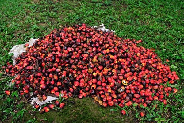 Emco opouští palmový olej, XXX Lutz v Praze sílí