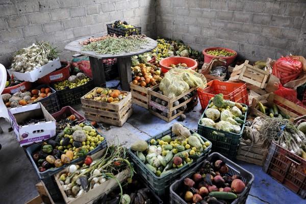 Nevyhovující potraviny mají obchody darovat