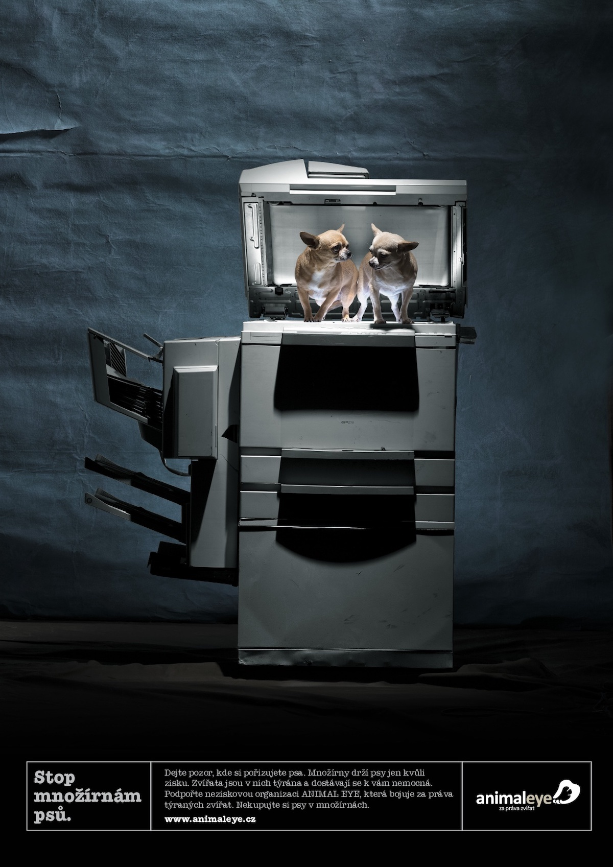 Publicis Praha vytvořila kampaň pro bono pro organizaci Animal Eye
