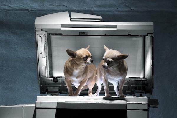 """""""Psi v kopírce: print ze staré školy, vtipný, k věci"""""""