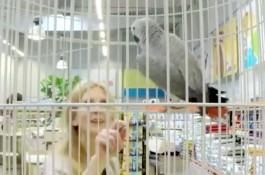Pojištění zvířat prodával mluvící papoušek