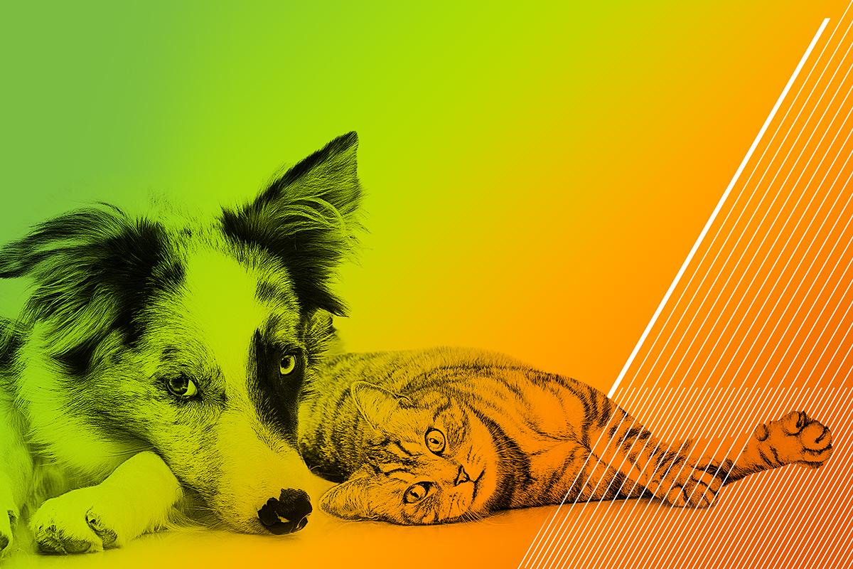 Jsou agentury a klienti opravdu jako kočky a psi?