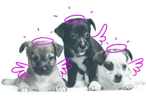 Pojištění zvířat PetExpert komunikuje Crest