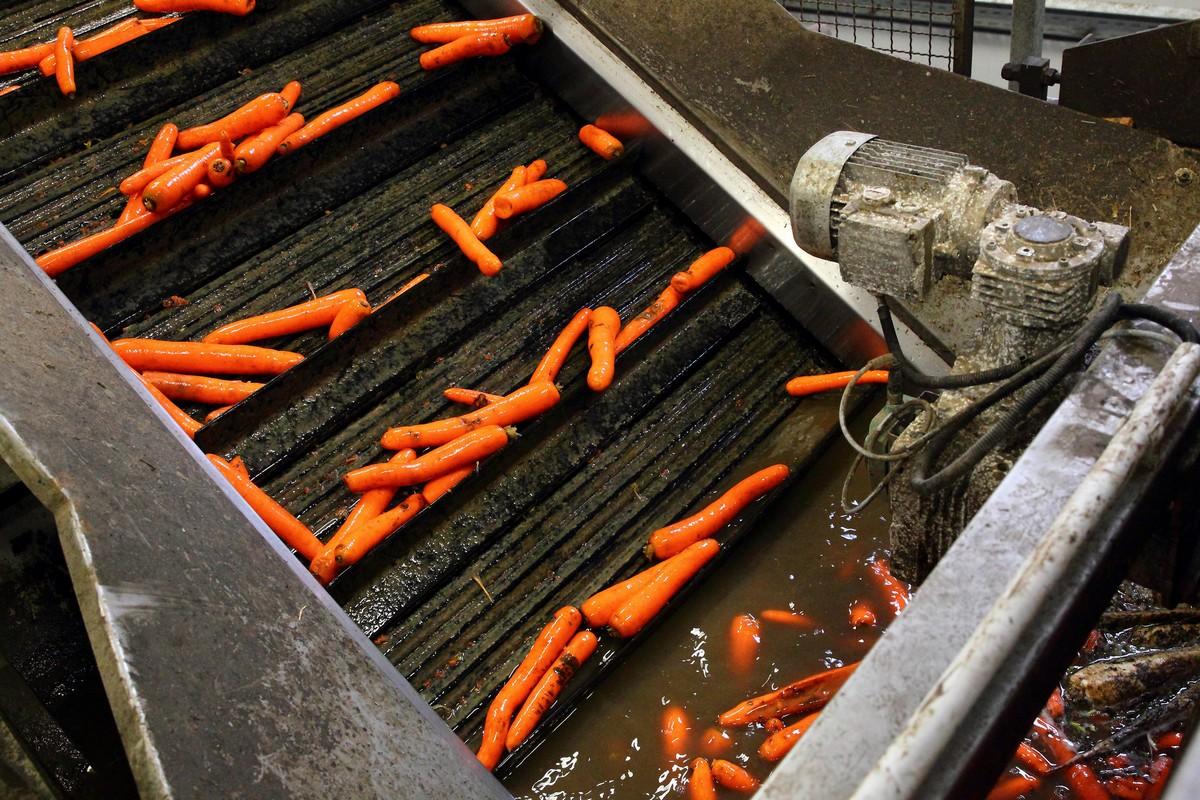 Očišťování mrkve