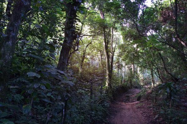 Lesní svět funguje jako interaktivní průvodce lesem, přehraje i zvuky zvířat