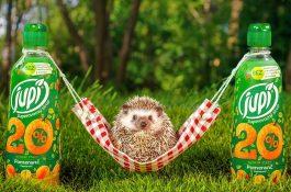 Jak Jupí na onlinu ušetřilo: využilo živého ježka