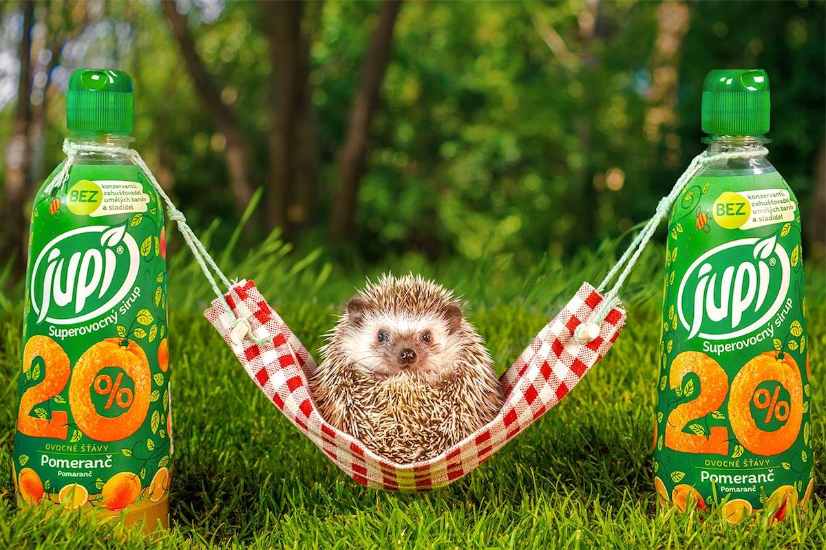 Živý ježek v kampani značky Jupí
