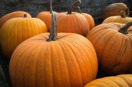Halloween, nebo Dušičky? Který svátek má v letácích řetězců navrch