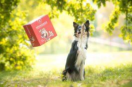 Spokojený pes uvádí Spokobox, krabici s pamlsky a hračkami na celý měsíc