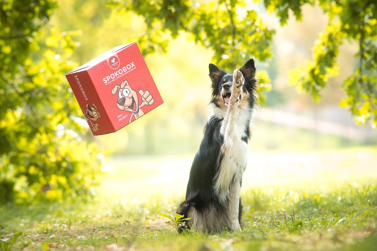 Spokobox od Spokojeného psa