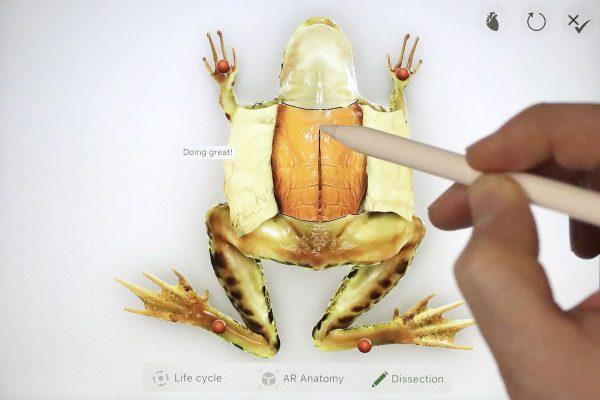 Aplikace roku podle Applu: žabí encyklopedie i ručně ilustrovaná hra