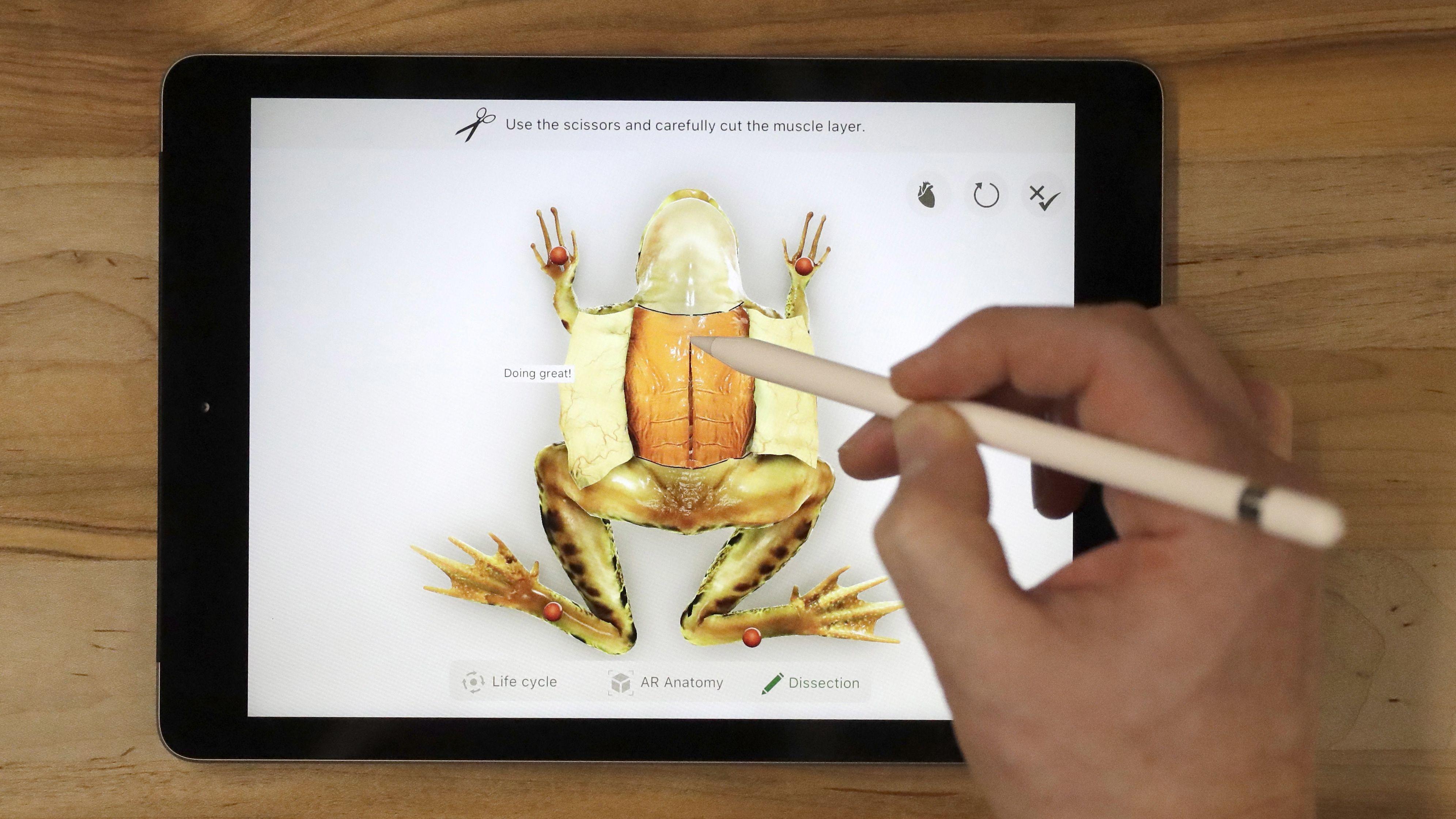 Ve Froggipedii si mohou lidé vyzkoušet i pitvu žáby