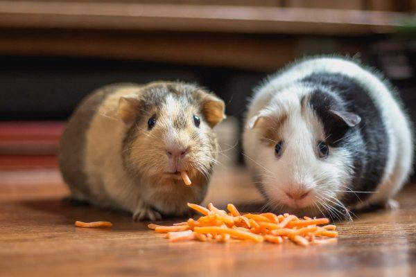 Češi a krmiva: Pedigree znají nejvíc, Whiskas kupují nejčastěji
