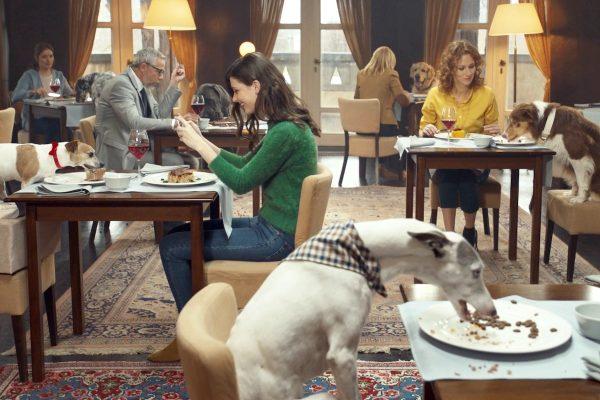 Psi ve spotu krmiva Brit stolují v Chateau Kotěra