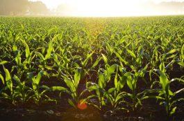 Hnutí Duha vylepšilo mobilní adresář farmářů pro spotřebitele