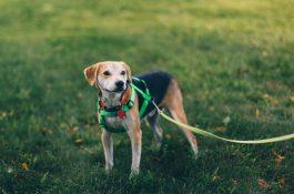 Aplikace Fiddo slibuje díky umělé inteligenci najít ztracené psy