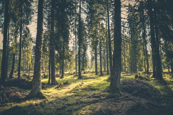 Lesy ČR přicházejí s věrnostní aplikací Klub nového lesa