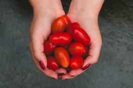 Albert nabízí vůbec nejlevněji rajčata, Globus zlevnil čaj a Jim Beam