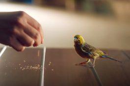 McDonald's nasazuje nový koncept: začíná ptáčkem, co denně pozoruje lidi