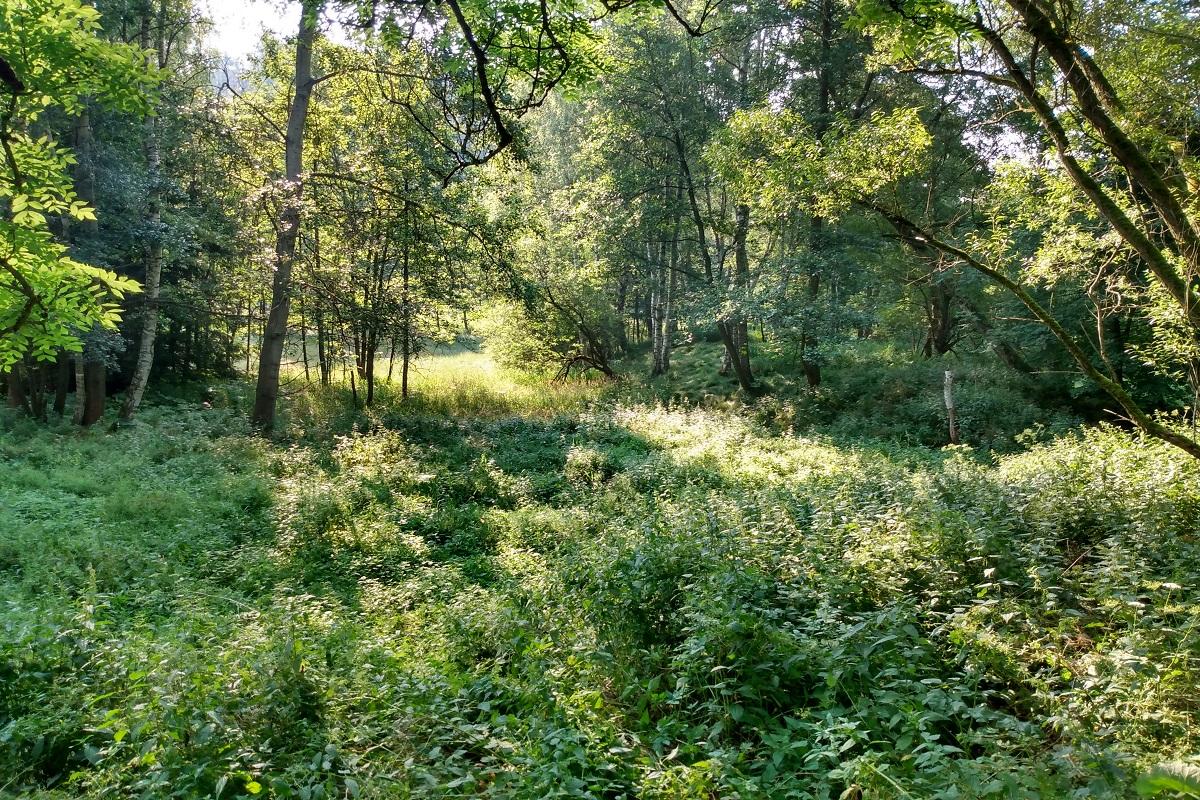 A co příroda – nakolik je univerzální?