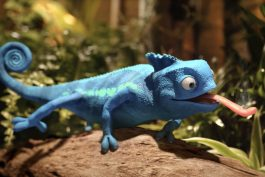 Jindru a Jindru nahrazuje modrý chameleon. ČSOB nasazuje nový koncept