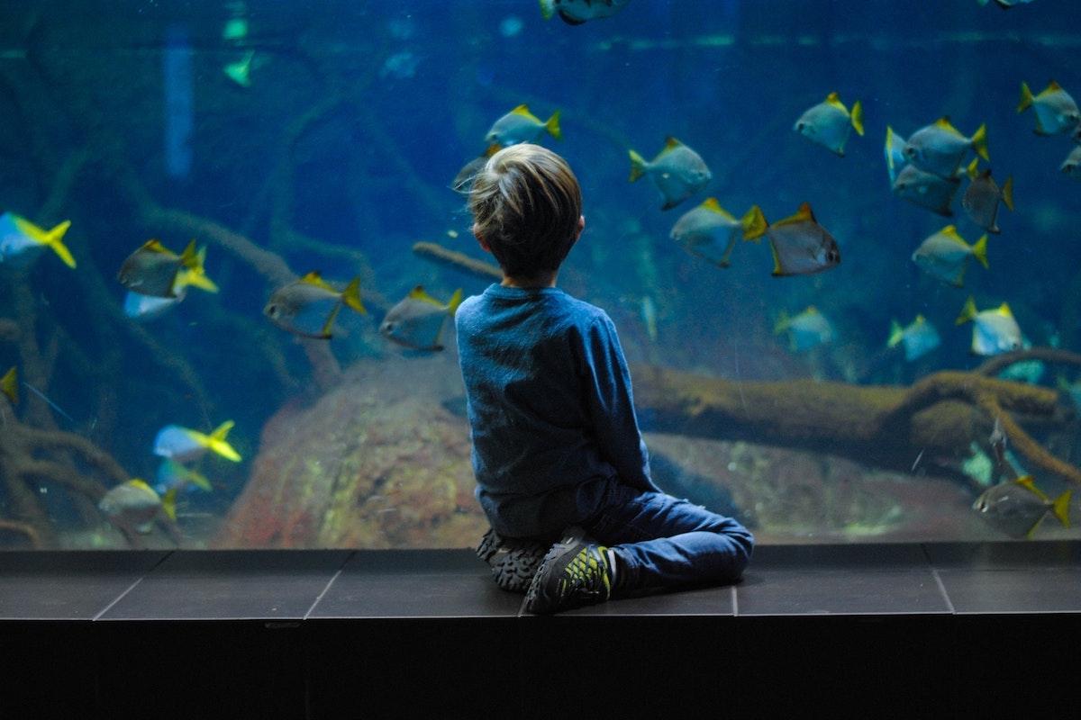 Chlapec hledí do budoucnosti, ve které je dostatek ryb a dostává se mu uznání jako svéprávného člověka