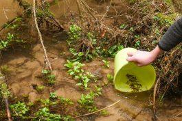 Agentura Pepr k 10. výročí vypustila 10.000 lososů
