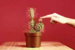 Kaktusák, benzínkář, zloděj. Rozvoz květin Florea představuje mužské archetypy